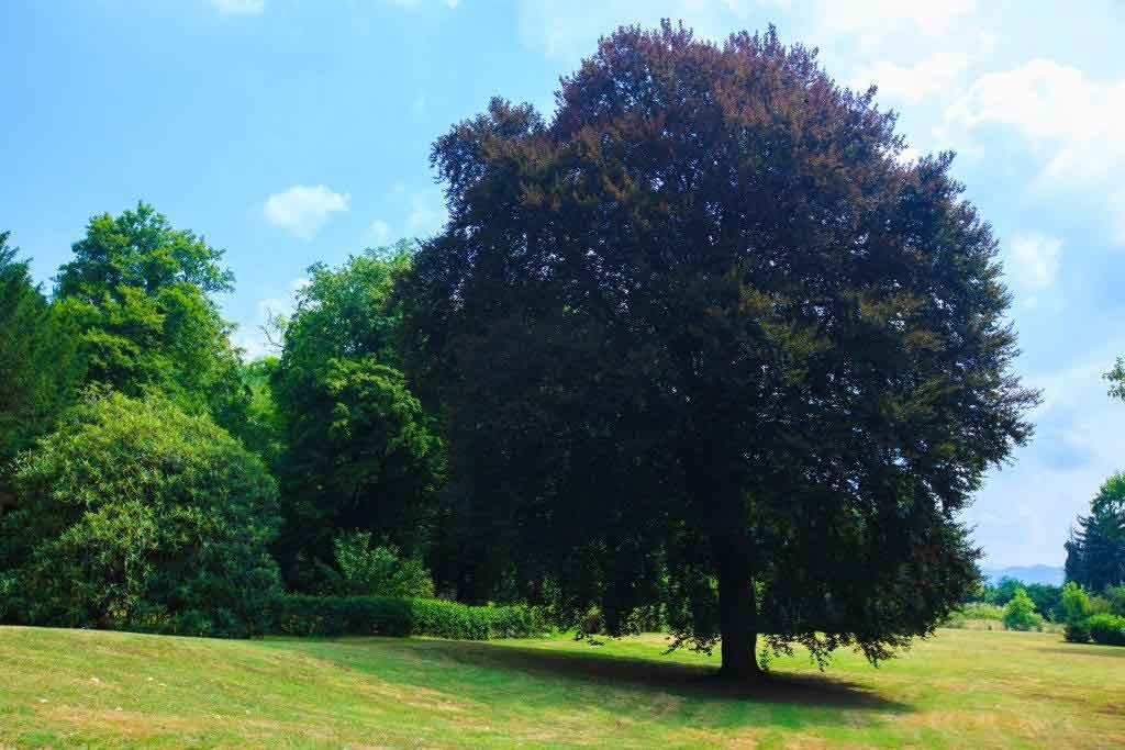 20_VillaSommiPicenardi_Giardino_Eng-alberi